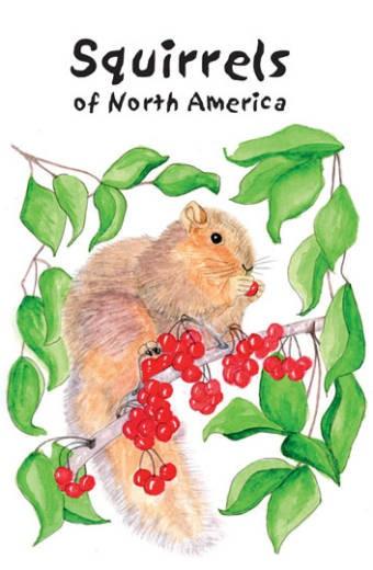 SquirrelsNA