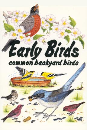 Common Backyard Birds early birds – bower house